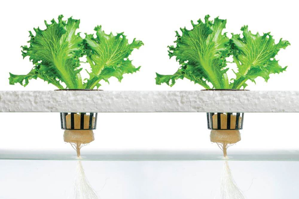 hydroponics a practical guide for the soilless grower