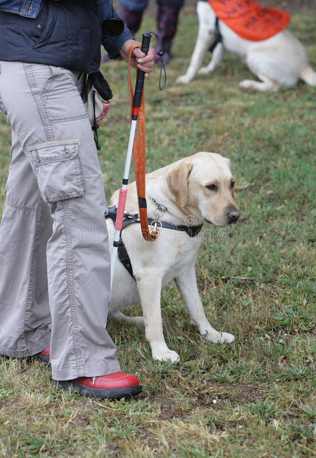 guide dog puppy walkers nz