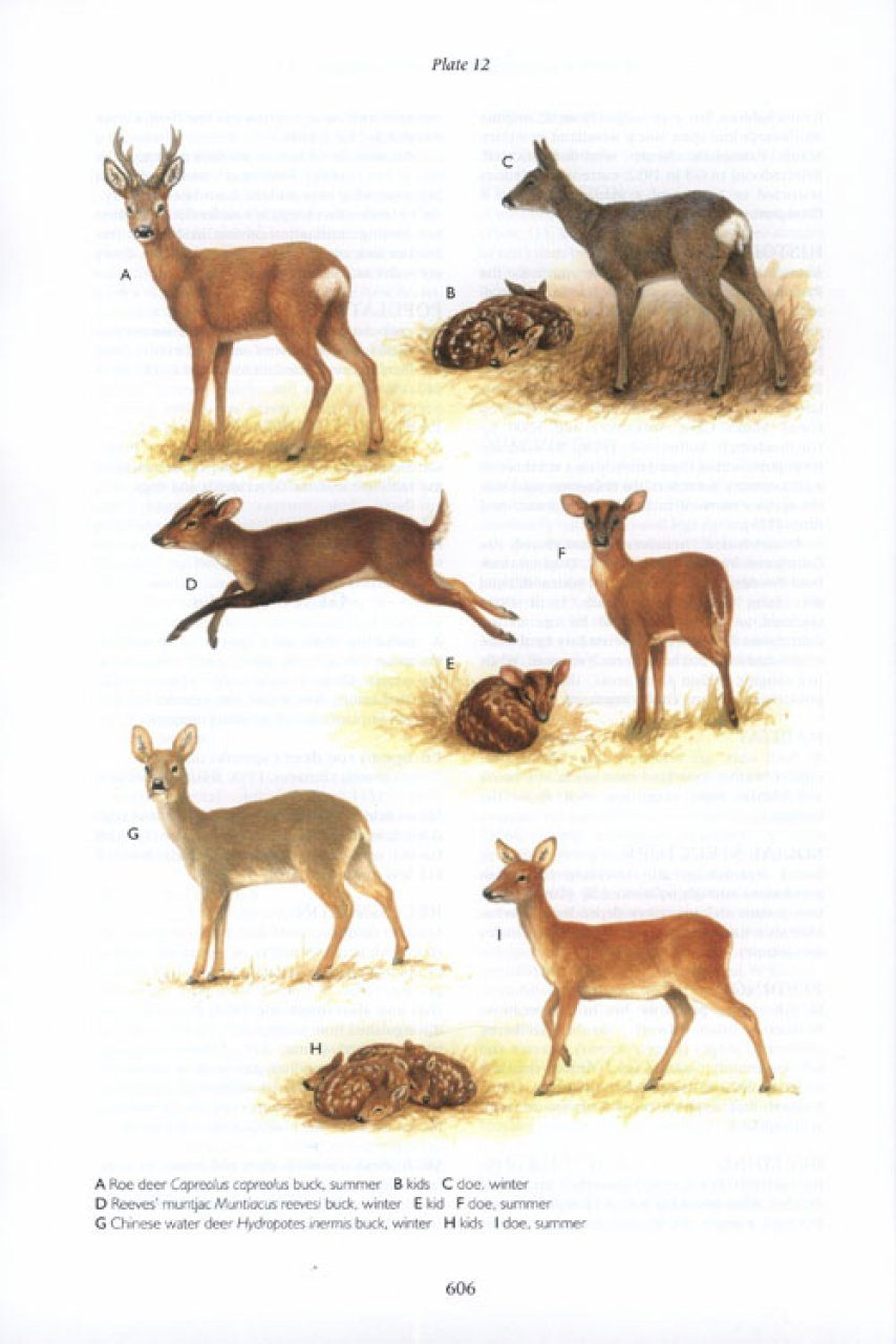 british bryological society field guide
