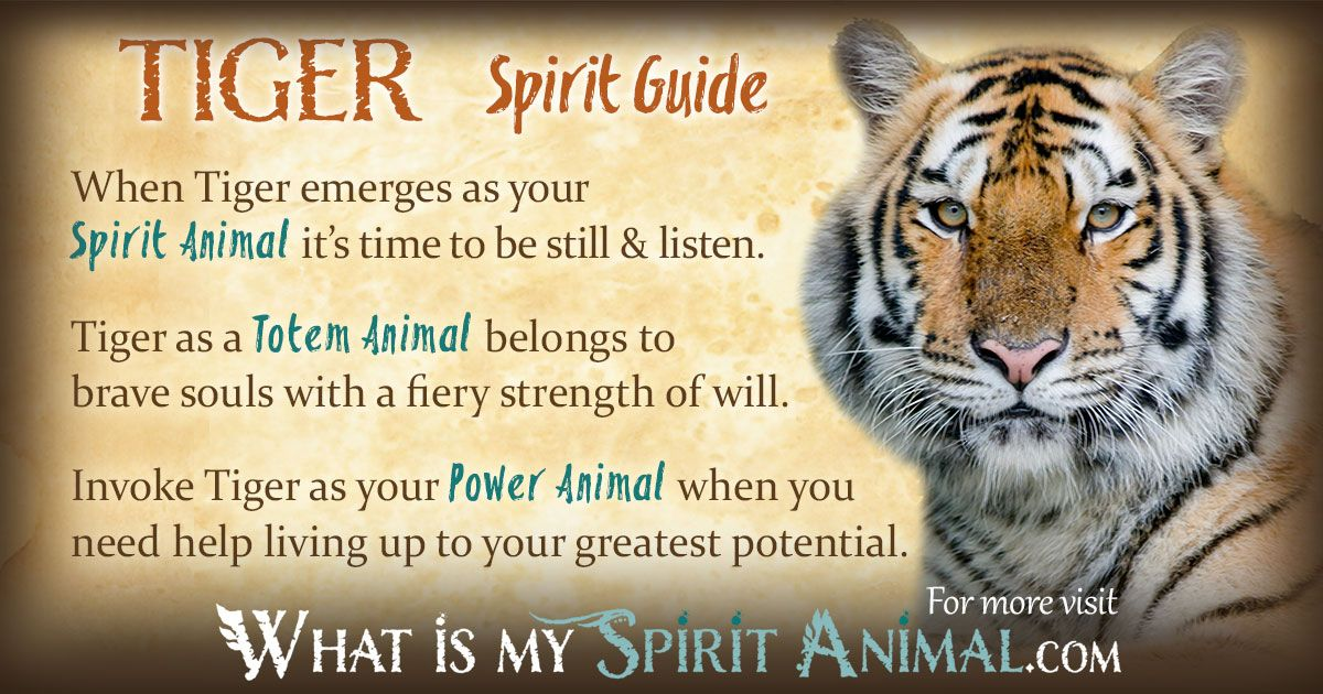 how to find my spirit animal guide