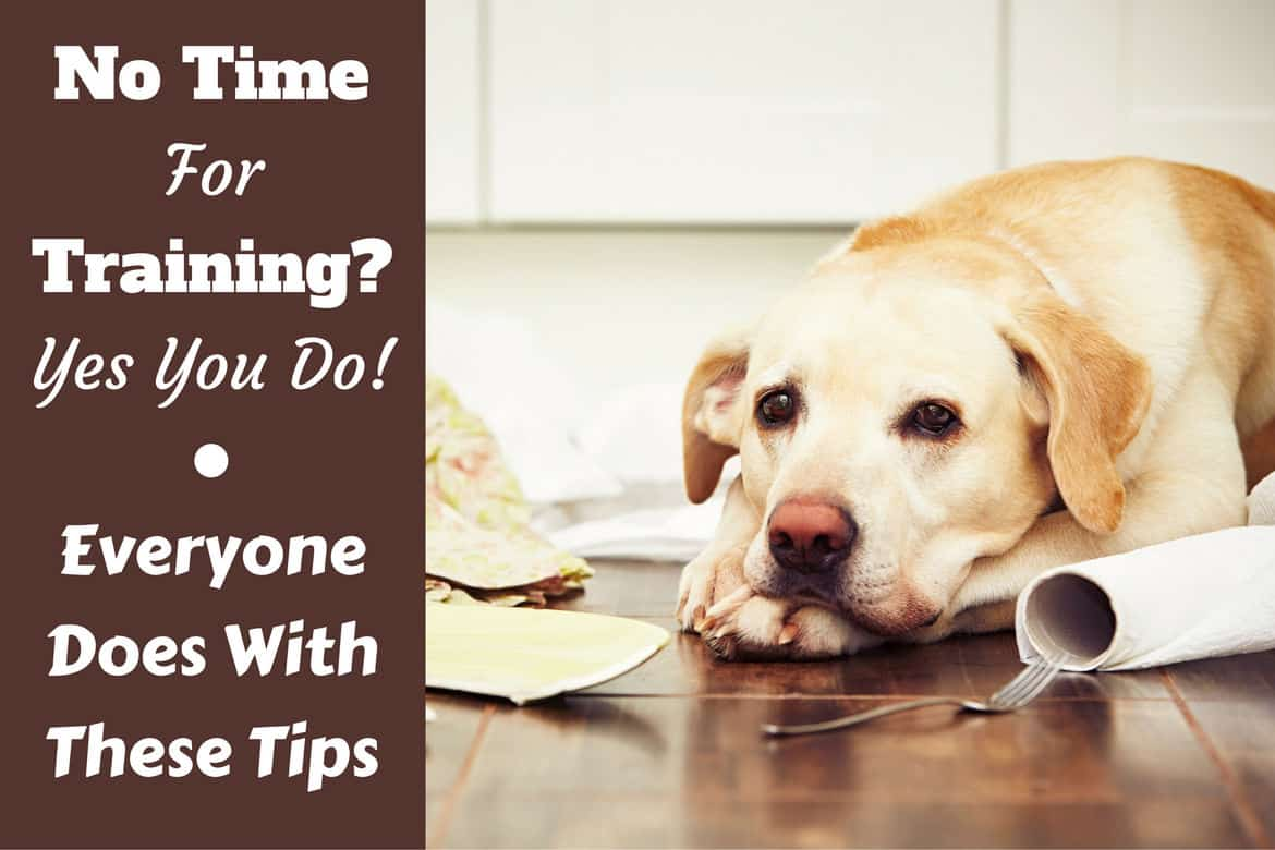 how much to train a guide dog