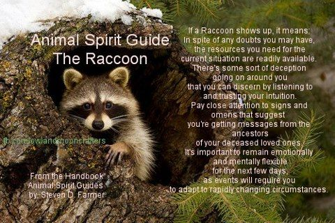 how do i find my spirit guide animal