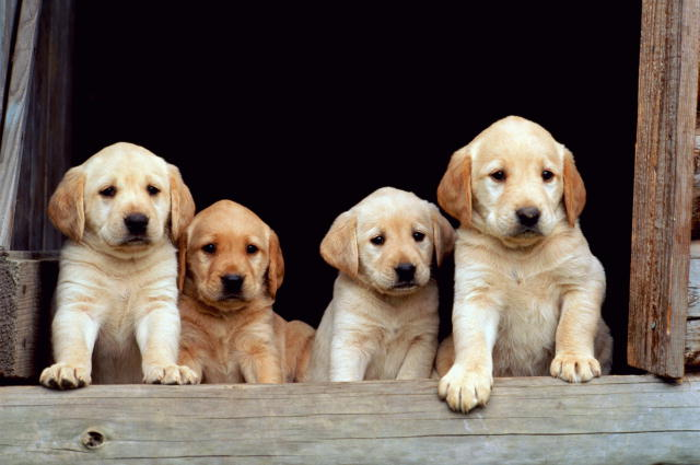 do guide dogs get to play