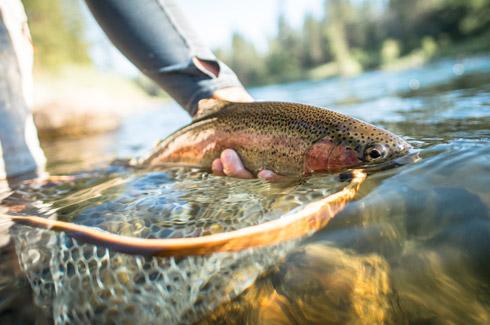 fishing guide license washington state
