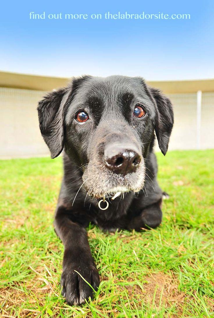 guide dogs failed training adoption