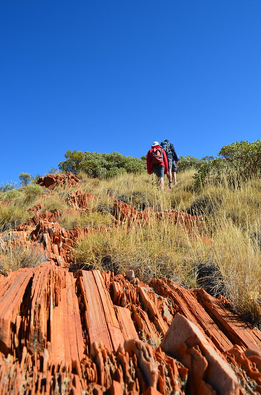 larapinta trail guided walking tours