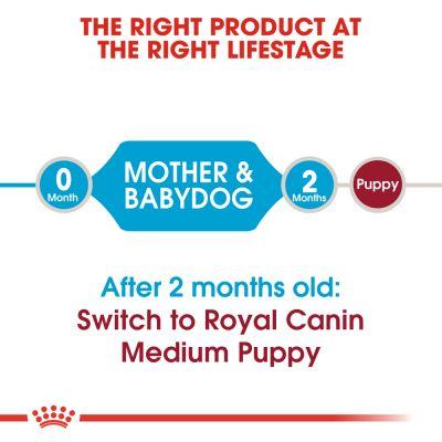 royal canin junior feeding guide