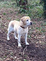 royal canin satiety feeding guide