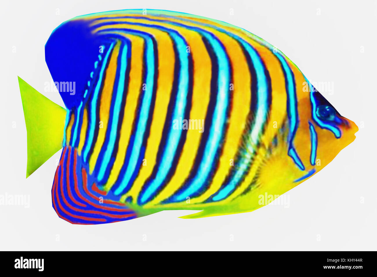 saltwater tropical fish species guide